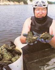 Alex Dunphy diving for Aspy Bay Oysters, on South Harbour, Cape Breton, Nova  Scotia