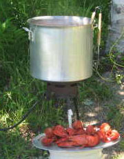 Boiled  Atlantic Lobsters, available at Hideaway Campground, Cabot Trail, Nova  Scotia.